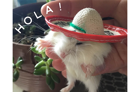 mouse wearing a sombrero