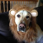 Chevy as Lion