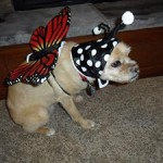 Toby the butterfly